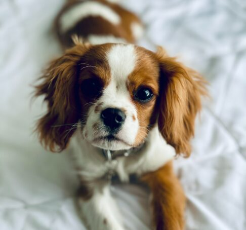 cute picture of dog